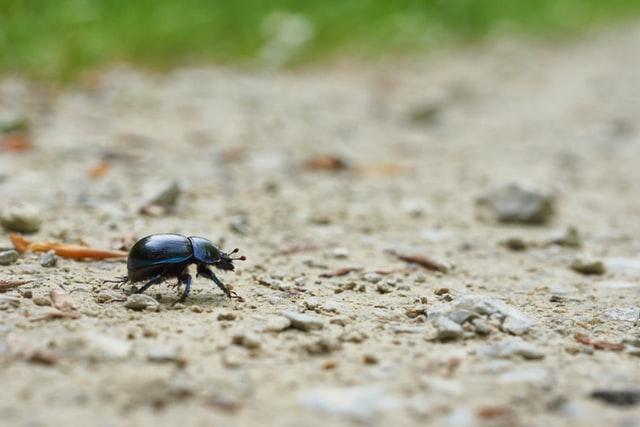 Photo of beetle by Wolfgang Hasselmann on Unsplash