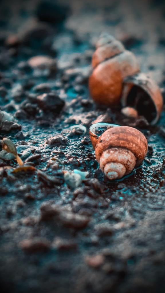 Photo of snail shells by YOGESH GOSAVI on Unsplash